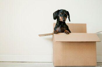 Rastrear pedido do Carrefour: tudo sobre o rastreamento de compras